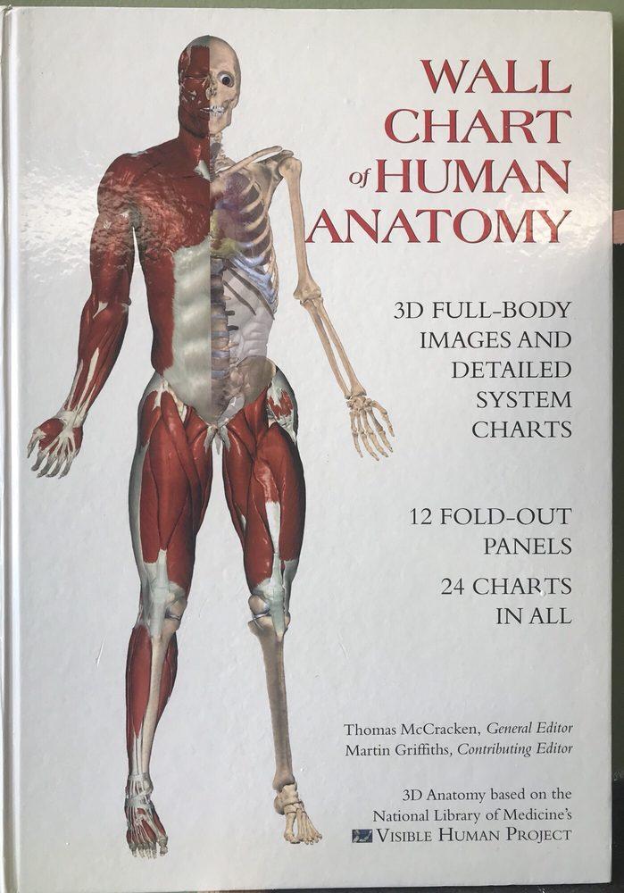 Gemütlich Körper Charts Fotos - Anatomie Von Menschlichen ...