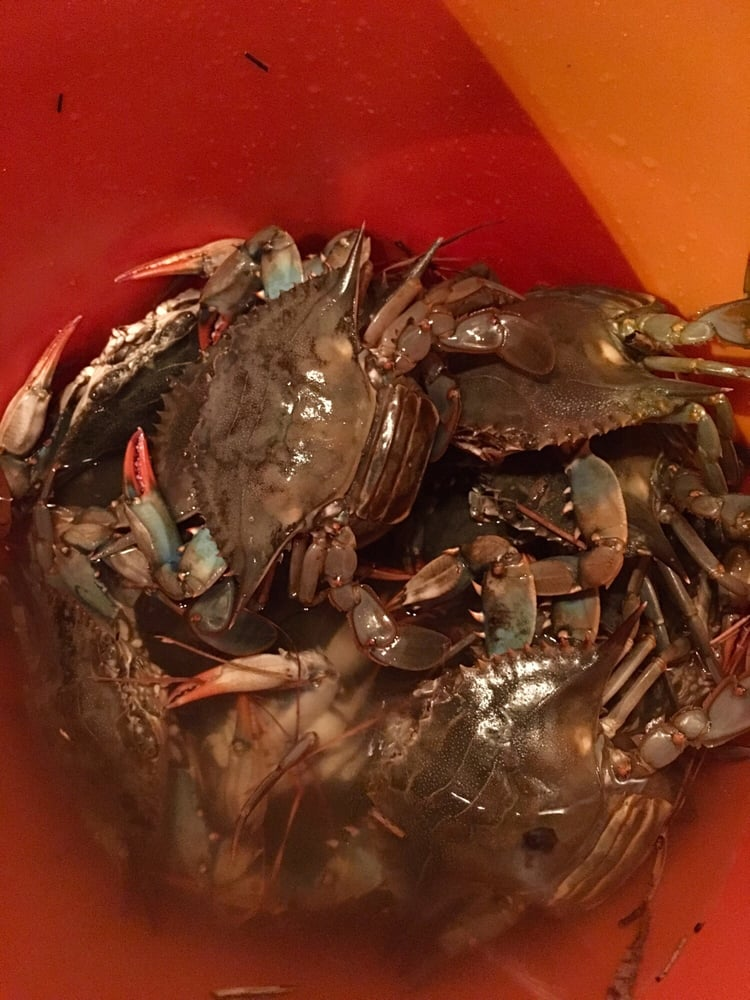 My crab catch of the night yelp for Lynnhaven fishing pier report