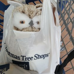 Christmas Tree Shops - 16 Photos & 30 Reviews - Christmas Trees - 2130 Marlton Pike W, Cherry ...