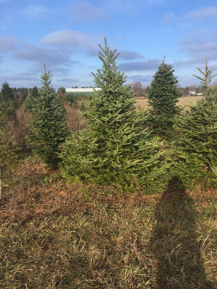 Jurek tree farm coupon