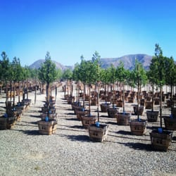 Valley Crest Tree Nurseries Gardening 3200 W Telegraph Rd