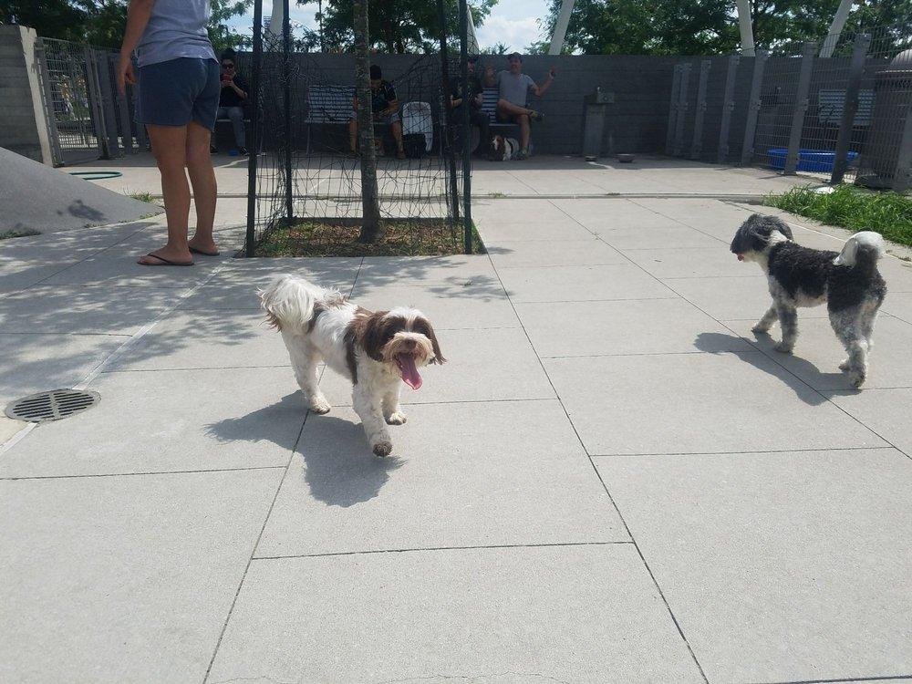 Long Island City Dog Walk