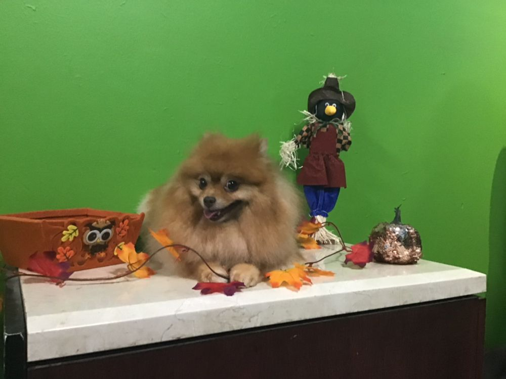 Central Bark Pet Grooming: 308 Tennessee St, Vallejo, CA