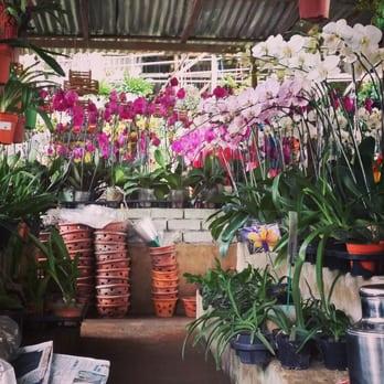Photo Of Sungai Buloh Orchid Nursery Kampung Melayu Batu 13 Selangor Malaysia