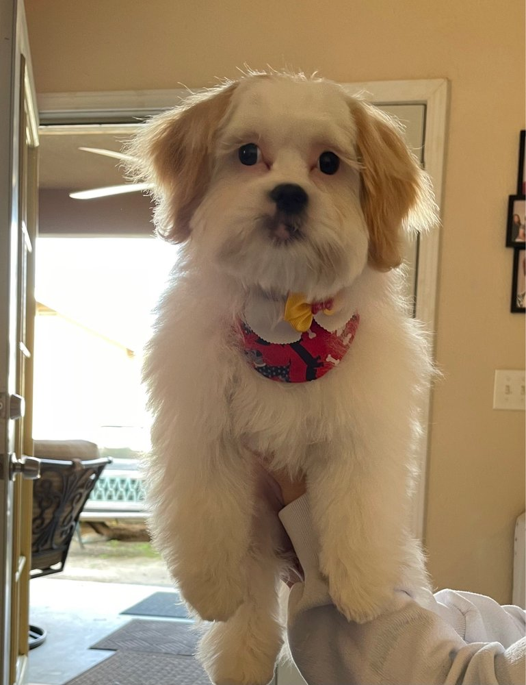 Urban Dawg Pet Grooming: 1727 Cecil Ave, Delano, CA