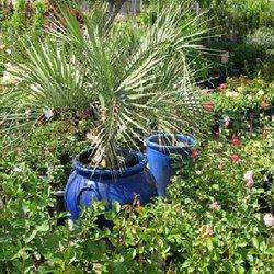 Foto De Rillito Nursery Garden Center Tucson Az Estados Unidos Unled