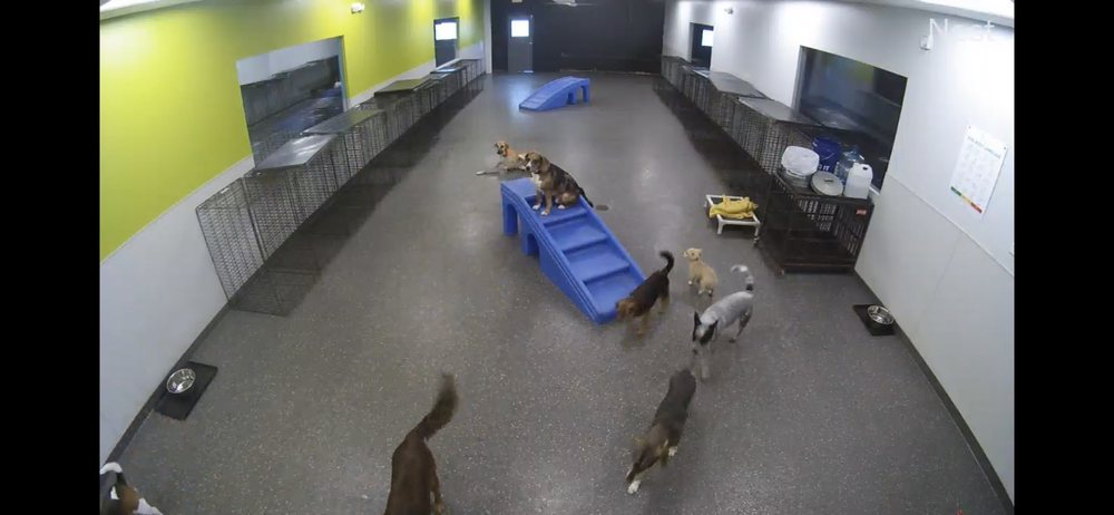 Dogtopia of Louisville-Hurstbourne: 221 South Hurstbourne Pkwy, Louisville, KY
