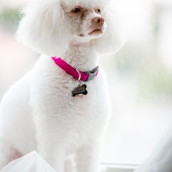 9f98aacbfafe Happy Tails Dog Spa - 345 Photos & 162 Reviews - Pet Groomers - 3574  Redondo Beach Blvd, Torrance, CA - Phone Number - Yelp