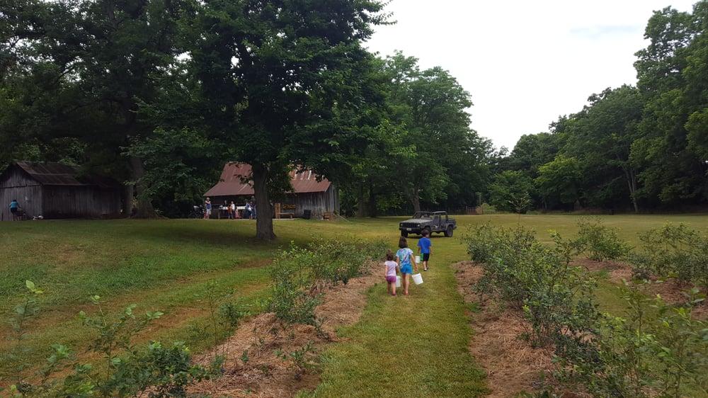 Burton's Farm Blueberries: 445 Silver Lake Rd, Billings, MO