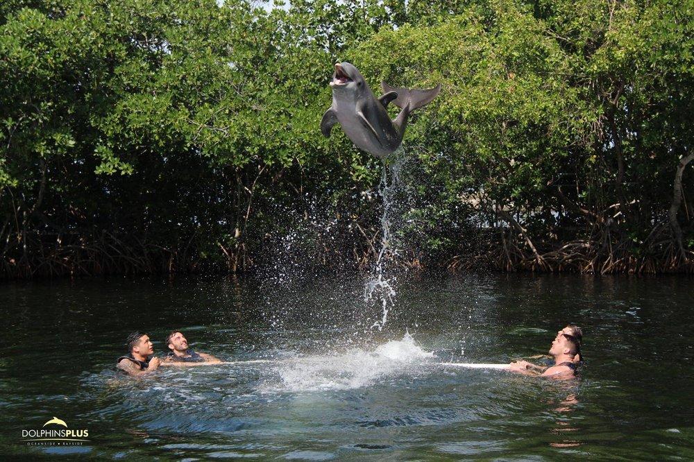 Dolphins Plus Bayside: 101900 Overseas Hwy, Key Largo, FL
