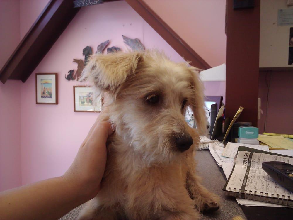 photos for a shear pleasure pet salon yelp