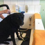 Animal house self service dog wash pet groomers 10121 w photo of animal house self service dog wash kennewick wa united states solutioingenieria Image collections