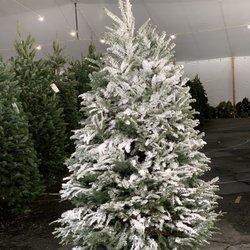 Christmas Tree Lot Near Me.Glendale Tree Lot 14 Photos 25 Reviews Christmas Trees