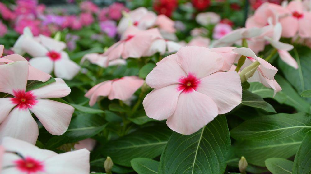 Photo of Calloway's Nursery - Flower Mound: Flower Mound, TX