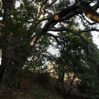 Photo Of Rancho Santa Ana Botanic Garden   Claremont, CA, United States. A