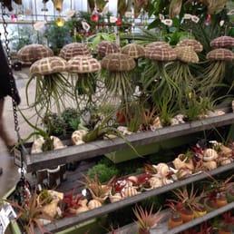 Mahoney S Garden Centers 23 Foton 61 Recensioner Tr Dg Rdsbutiker Plantskolor 242
