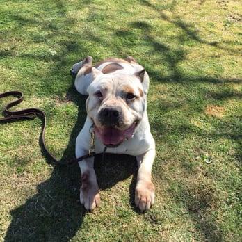 Dog Kennels In Bakersfield Ca