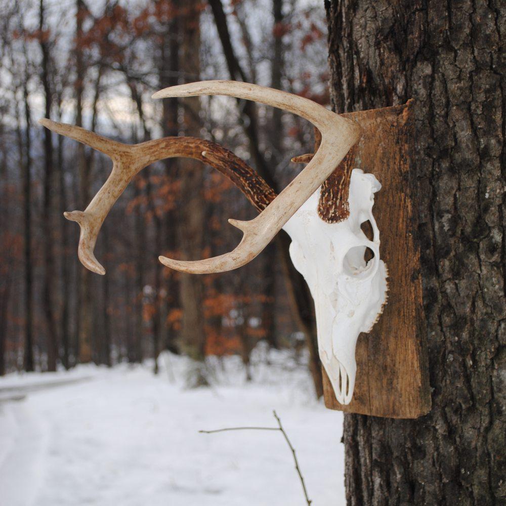 Wildcat Taxidermy: 440 White Pine Ln, Boyce, VA