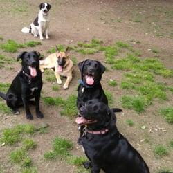 Dog Training Newport News Va