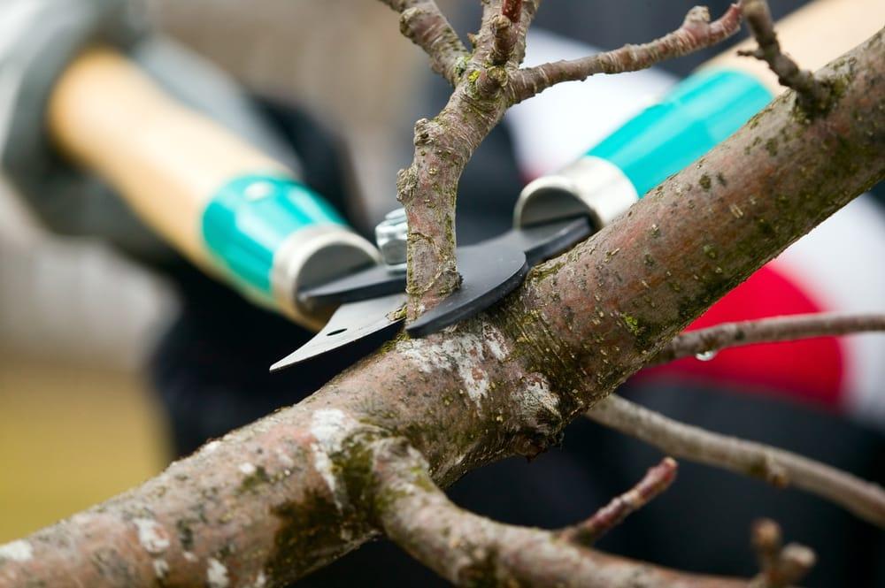 Highplains Tree Service: Linwood, KS