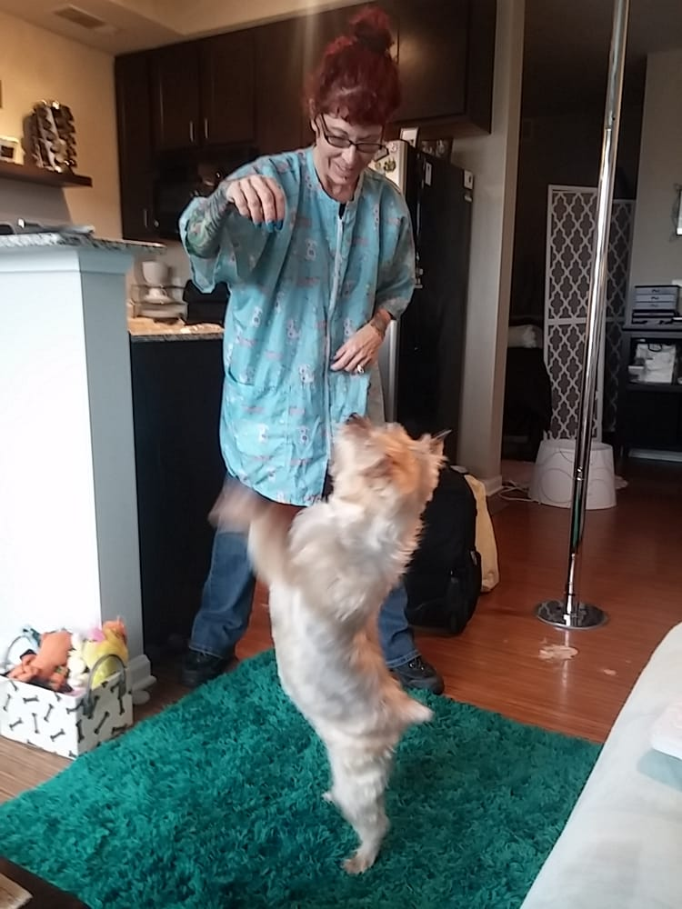 JJ's Cat & Dog Home Grooming Service