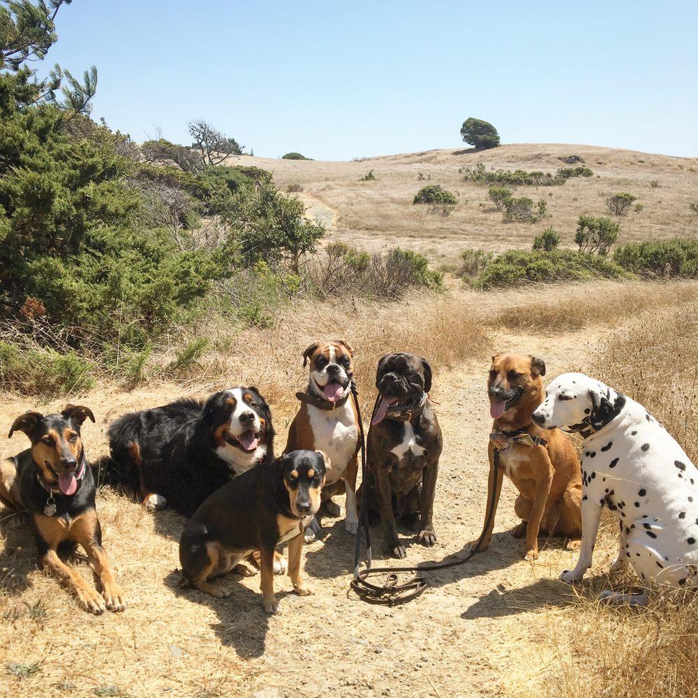 The Tiburon Dog Butler: 315 Ridge Rd, Tiburon, CA