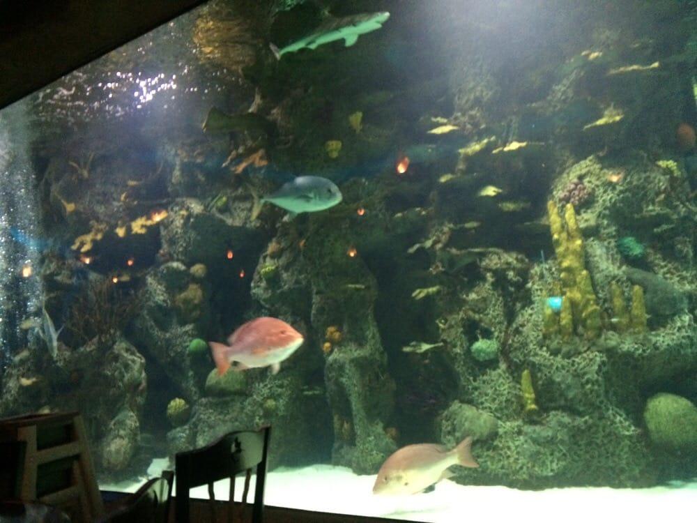 Great Fish Tank Yelp
