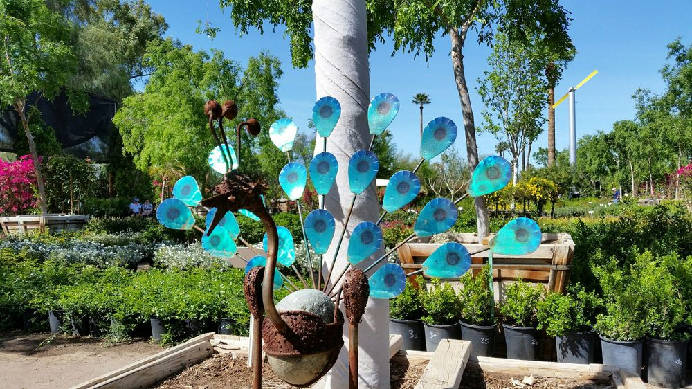 Whitfill Nursery 110 Photos 72 Reviews Nurseries Gardening 824 E Glendale Ave Phoenix Az Phone Number Yelp