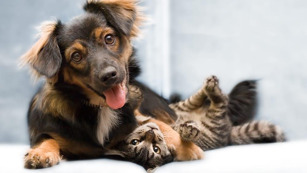 Pet Vac Animal Hospital: 2920 Reidville Rd, Spartanburg, SC