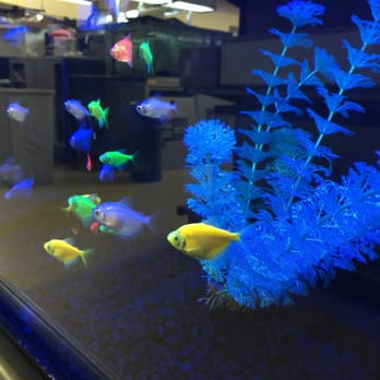 Petco 25 photos 13 reviews pet stores 43465 ford for Petco saltwater fish