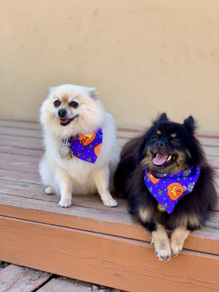 Puff N Fluff Pet Grooming: 153 E El Roblar, Ojai, CA