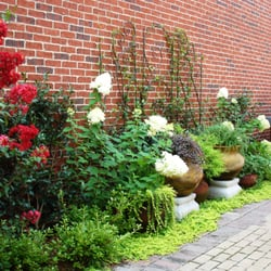 Plants Creative Landscapes - 31 Photos - Landscaping - 425 E College Ave Decatur Decatur GA ...
