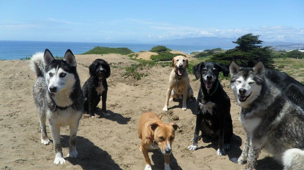 Doggins Day Care: San Francisco, CA