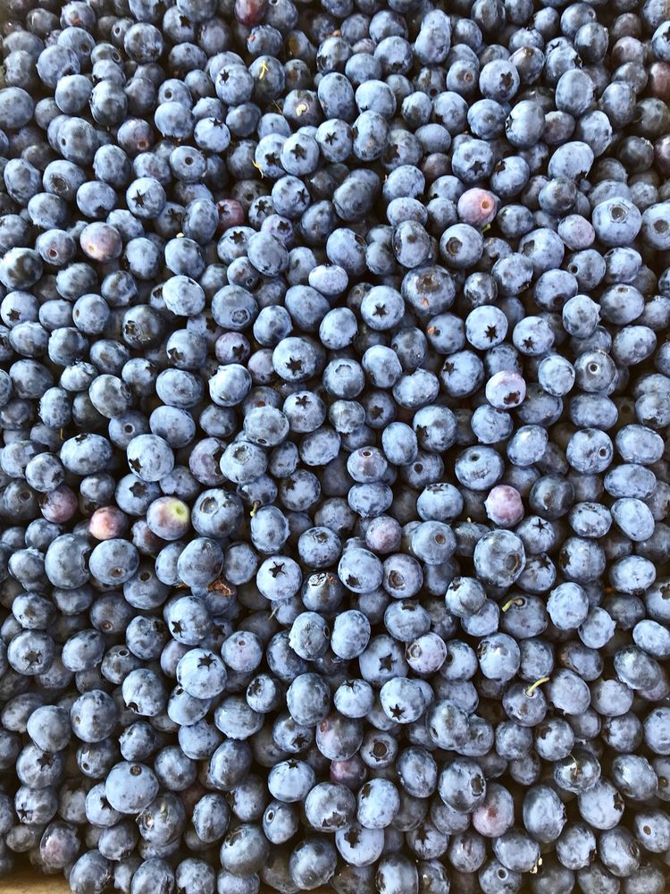 Bryant Blueberry Farm and Nursery: 5628 Grandview Rd, Arlington, WA