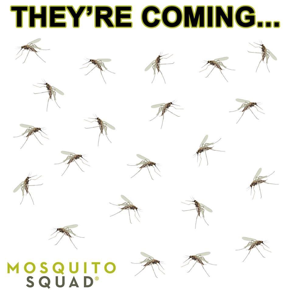 Mosquito Squad - St Joseph: 4239 Niles Rd, St Joseph, MI