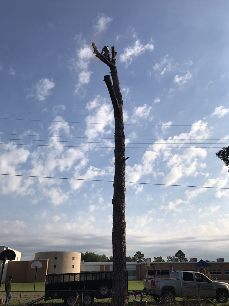 Top Tree Service: Sherman, TX