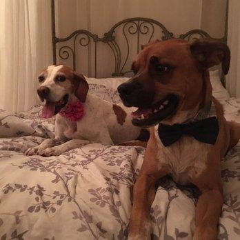 Dog Day Care Glendale Az