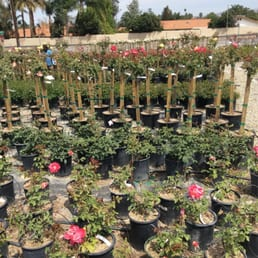 Photo Of Paradise Garden Center Riverside Ca United States Roses And