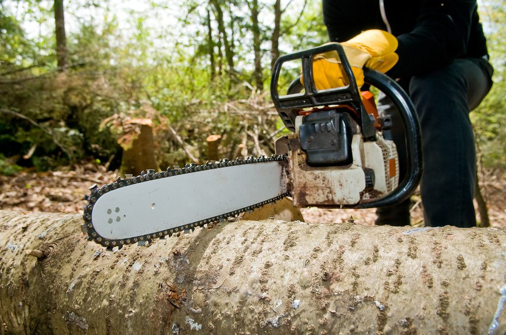 Timberjack Tree Service: Pittsville, MD