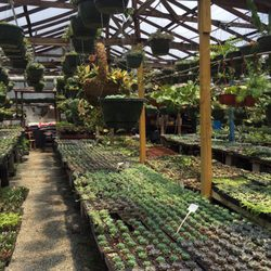Photo Of Malone S Nursery Charlotte Nc United States Succulents For Days