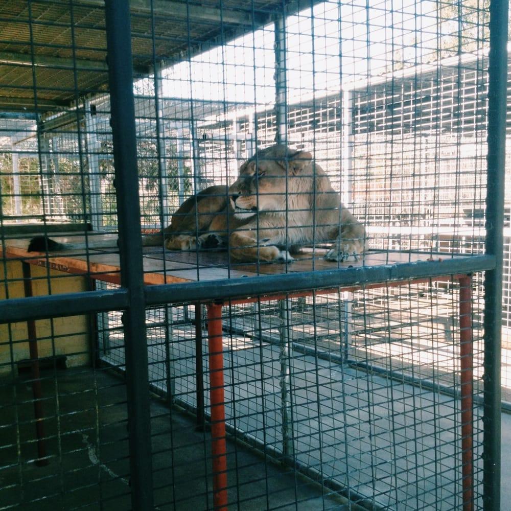 Photos For America S Teaching Zoo Yelp