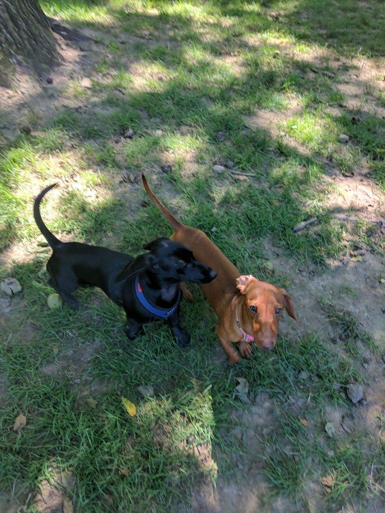 Morris Central Park Dog Park
