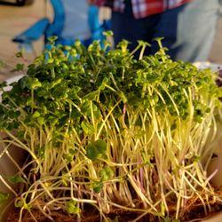 Omaha Microgreens - 22 Photos - Health Markets - 5065 Blondo