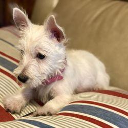 Puppies 'N Love - 92 Photos & 64 Reviews - Pet Stores - 7700