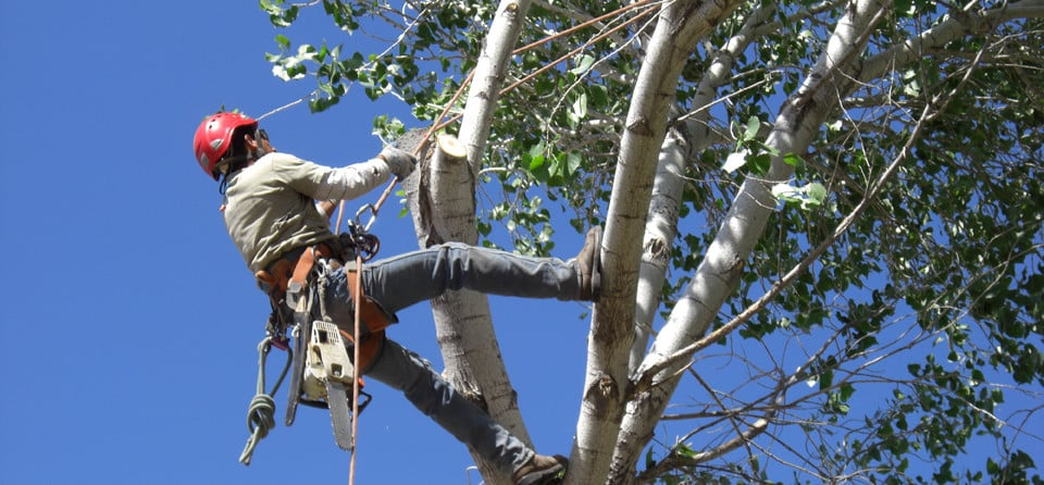 Wise Tree Care