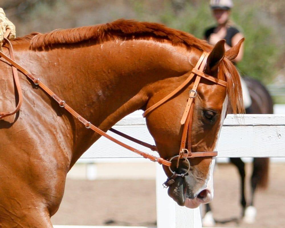 Rancho El Camino Equestrian: 13998 Old El Camino Real, San Diego, CA