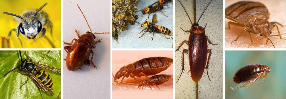 Ultimate Pest Control: 52A Holworthy St, Rochester, NY