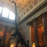 American Museum Of Natural History Nycid