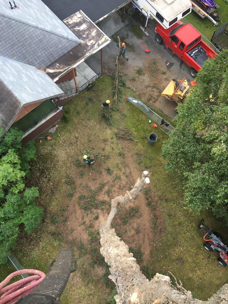 Paul's Tree Service: Anchorage, AK