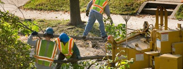 DC Family Tree Service: Barker, NY